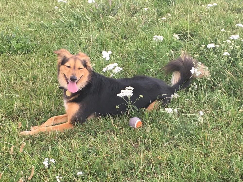 Hylands Park dog walk, Essex - E623FF4B-718A-43EF-A1A1-F62E4EA9B462.jpeg