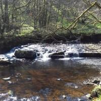 Hardcastle Crags dog walks, West Yorkshire - 20190411_130348.jpg