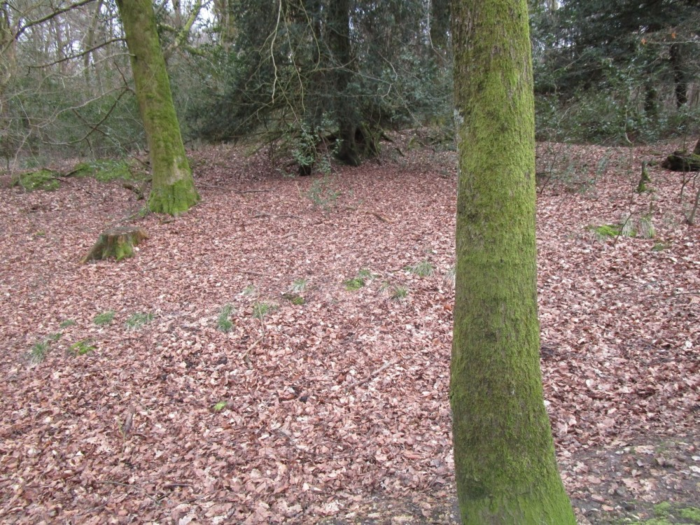 A25 woodland dog walk near Dorking, Surrey - Surrey dog walks and dog-friendly pubs.JPG