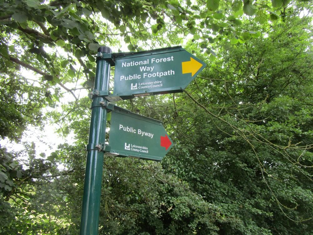 Woodland local dog walk, Leicestershire - National Forest dog walk Leicestershire