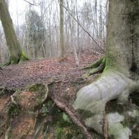 Woodland dog walk near Chartwell, Kent