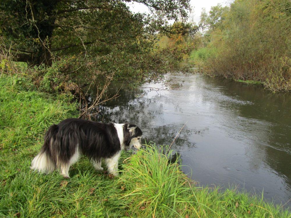 A4 Dog walk and dog-friendly inn, Berkshire - Berkshire dog-friendly pub and dog walk