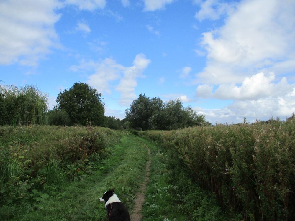 A329 dog-friendly pub and dog walks, Oxfordshire - Dog-friendly pub and dog walk Oxfordshire.JPG