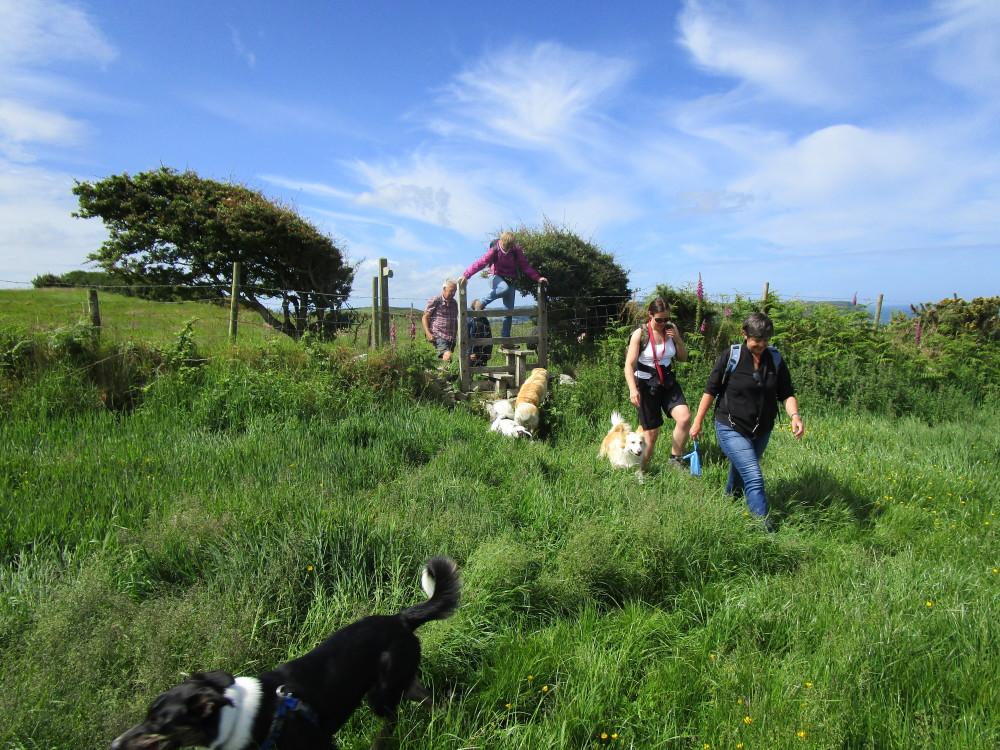 Coast path and dog-friendly pub on the beach, Wales - Dog walks in Wales