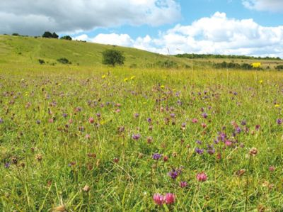 Unspoiled walk with flowers and birdsong, Wiltshire - Driving with Dogs