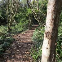 Swanage country park dog walk, Dorset - IMG_6439.JPG