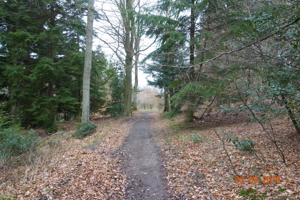 Hermitage dog-friendly pub and dog walk, Berkshire - Berkshire dog friendly pub and dog walk3