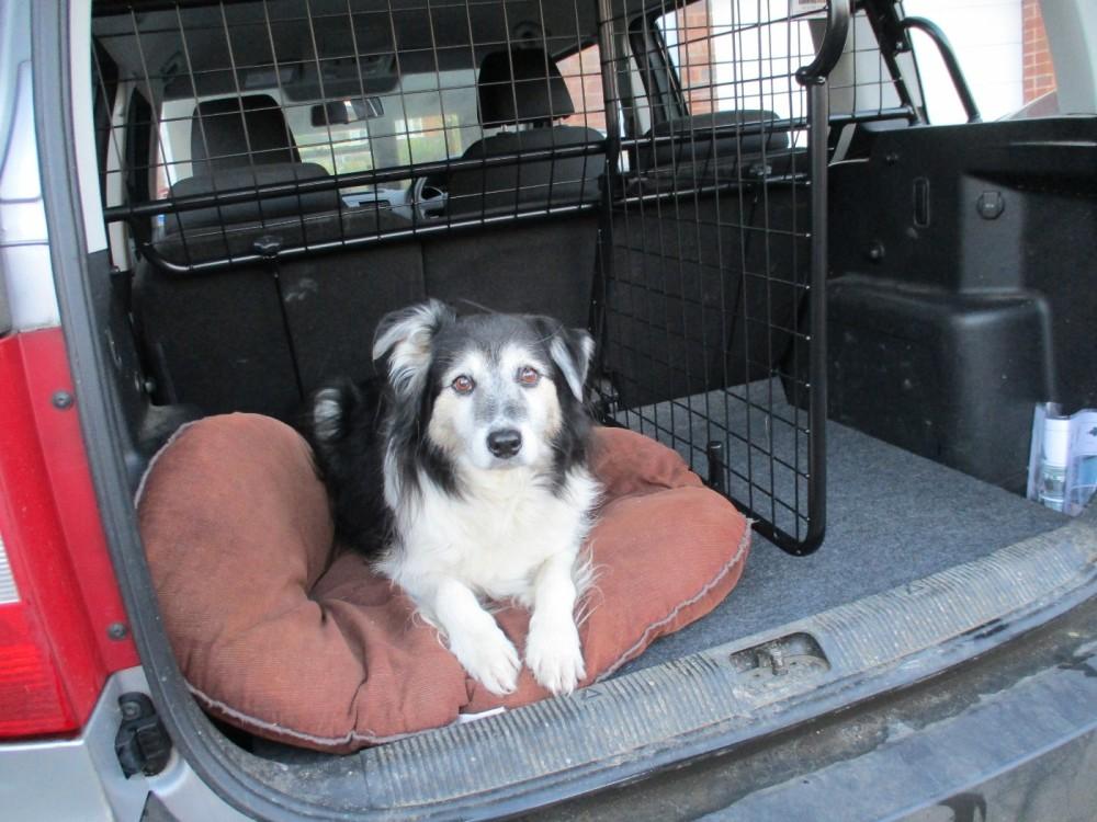 Guardsman dog guard and boot divider.JPG