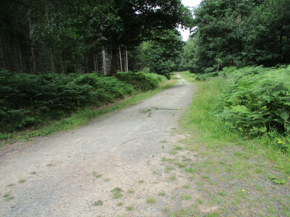 Quiet forest dog walk near the Wyre Forest, Shropshire - IMG_2686.JPG