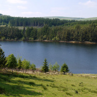 Lakeside dog walk near Llanidloes, Wales - wales dog walks.jpg