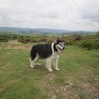 Dog walk on the Welsh border, Shropshire - Shropshire dog walks.JPG