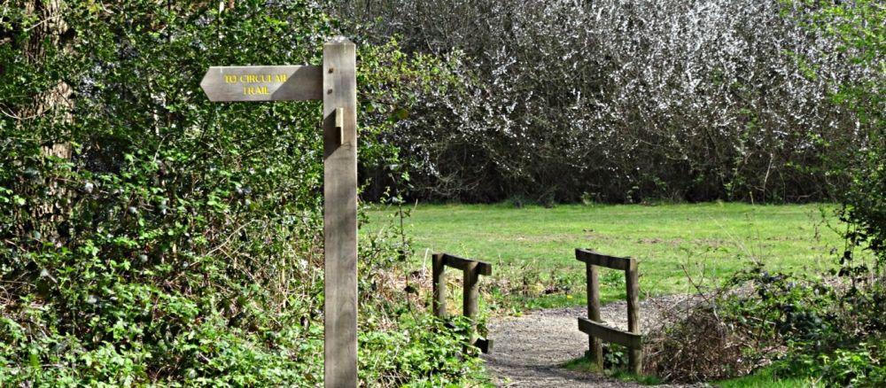 A24 dog walk near Dorking, Surrey - Surrey dog walk
