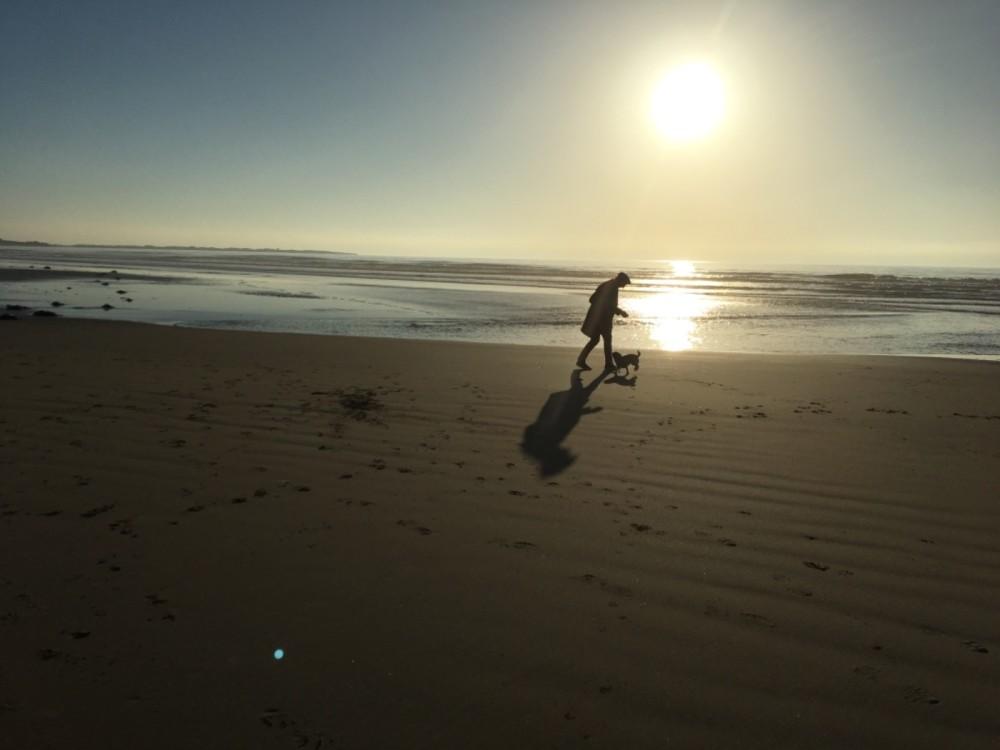 Harlech dog-friendly beach, Wales - A9C5C159-230A-4D9E-8D7E-2FE6AD34EF7E.jpeg