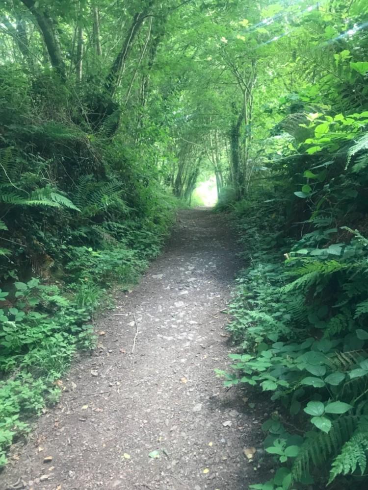Woodland dog walk with no stiles or sheep Pembrokeshire, Wales - 85C42DE5-2B1B-4E8F-9093-1A08C295A9FE.jpeg