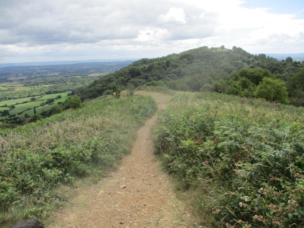 Best dog walk over the Malverns, Worcestershire - IMG_2258.JPG
