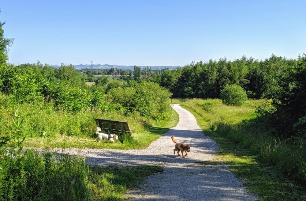 M62 J.7 Dog Walk at Sutton Manor Woodlands (The Dream Sculpture), Merseyside - IMG_20190627_091300.jpg