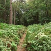 Beautiful hilly woods for a dog walk, Norfolk - BFE44474-91FA-4EA4-8521-6164CE8C83D1.jpeg