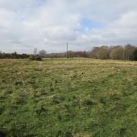 A22 forest walk near Wych Cross, East Sussex - east sussex dog walks.JPG