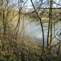 A24 Country Park dog walk near Horsham, West Sussex - Sussex dog walks.JPG