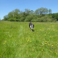 Wolds village circular dog walk, Lincolnshire - Lincolnshire dog walk
