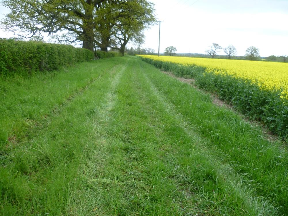 A435 near Alcester dog-friendly inn and dog walk, Warwickshire - Warwickshire dog walk with dog-friendly pub