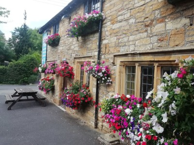 Dog walks from a pretty dog-friendly pub near Yeovil, Somerset - Driving with Dogs