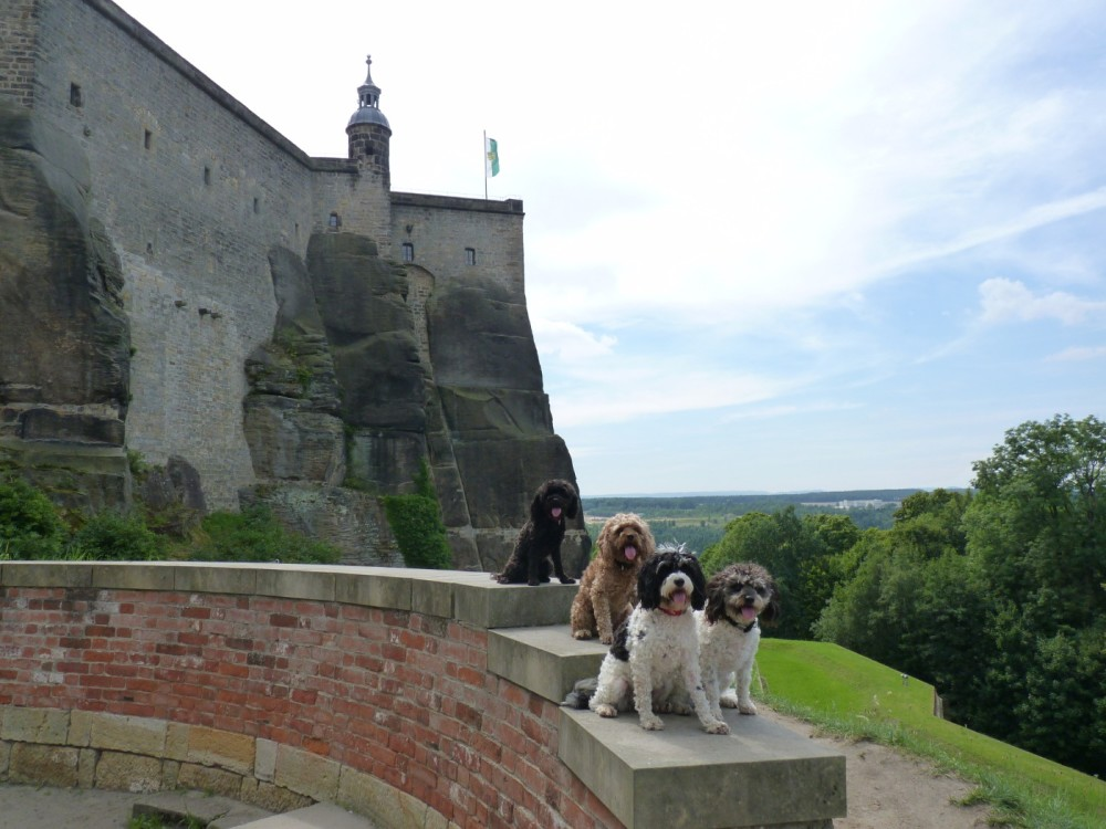 Visiting The Saxon Swiss National Park in Germany with Dogs