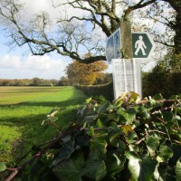 A37 dog-friendly dining and dog walk, Dorset - IMG_6288.JPG