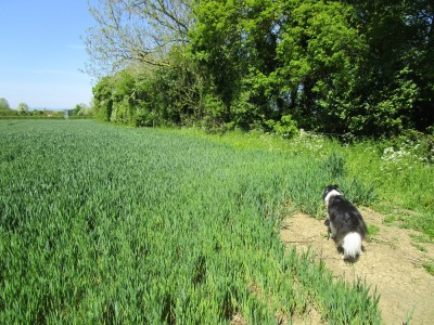 Dog-friendly pub and doggie leg-stretch near the M5, Worcestershire - Driving with Dogs