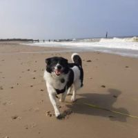 Eccles dog-friendly beach and cafe, Norfolk - 6FC06D32-5799-4328-856C-1F9E22942F4C.jpeg
