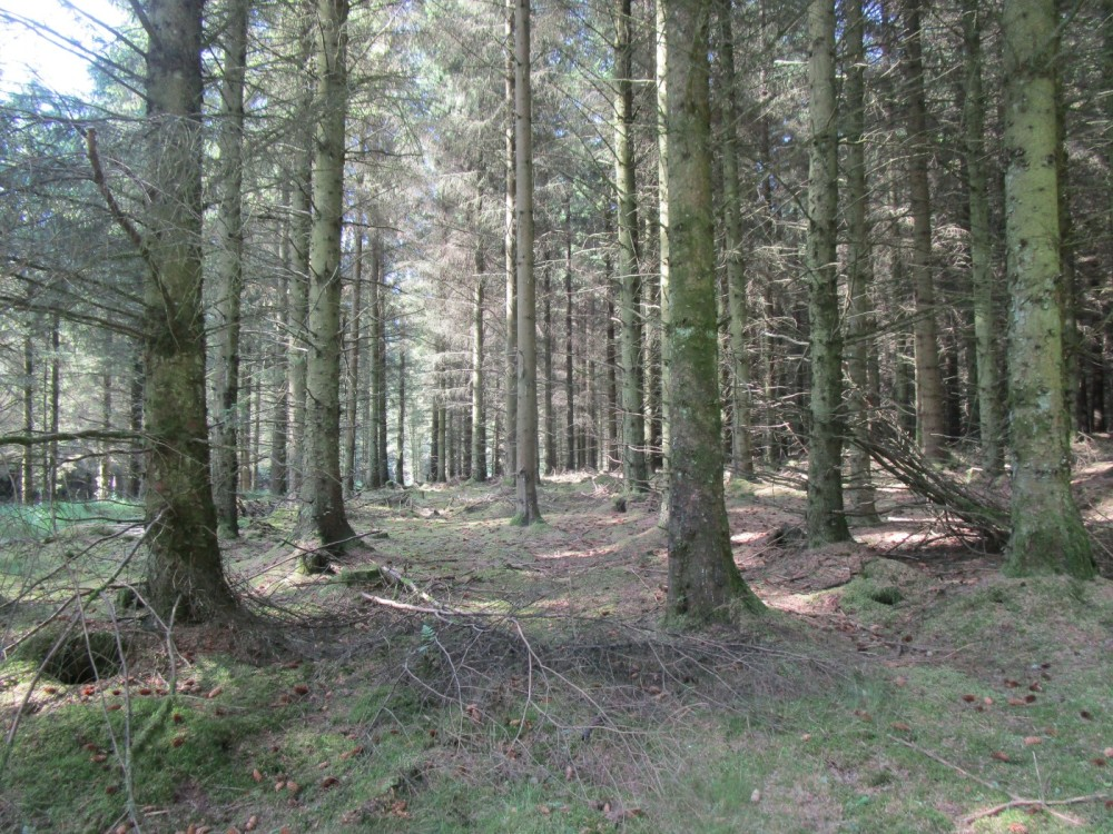 A488 Radnor Forest dog walk near Bleddfa, Wales - dog-friendly pubs and dog walks in Wales.JPG