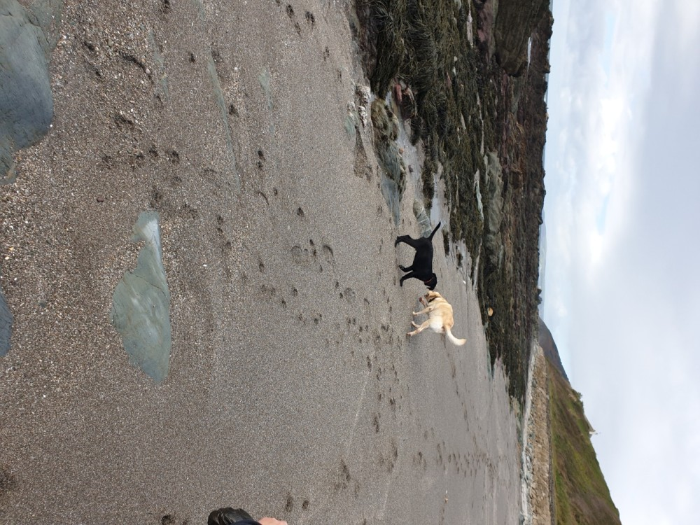 Portwrinkle Beach - dog-friendly, Cornwall - 20191015_111814.jpg