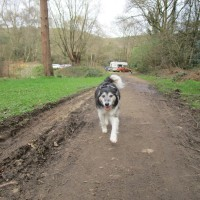 A25 woodland dog walk near Abinger Hammer, Surrey - Surrey dog walks.JPG