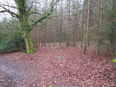 A325 Woodland dog walk near Farnham, Hampshire - Driving with Dogs