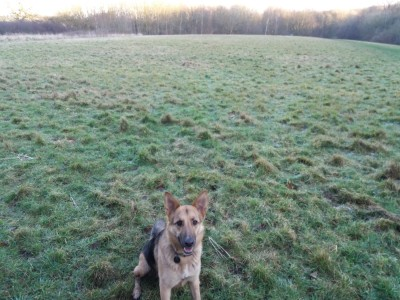 Dog walk with Woods, Tracks, Fields, Golf Course!, Leicestershire - Driving with Dogs