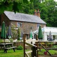 Woodland dog walk and dog-friendly pub near Farnham, Surrey - Dog walks with dog-friendly pubs in surrey.jpg