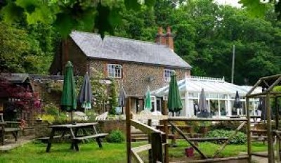 Woodland dog walk and dog-friendly pub near Farnham, Surrey - Driving with Dogs