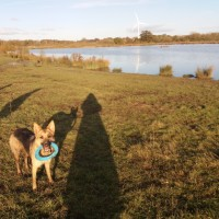 Wander for hours, a different route every day!, Leicestershire - A43F9901-4DAB-4DD5-B2E1-2E6D31C13014.jpeg