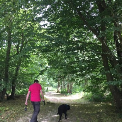 A259 Woodland dog walk and dog-friendly pub, East Sussex - Driving with Dogs