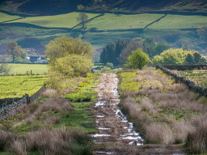 A689 Heritage Railway and a dog walk on the Pennine Way, Northumberland - Dog walk near the Pennine Way.jpg