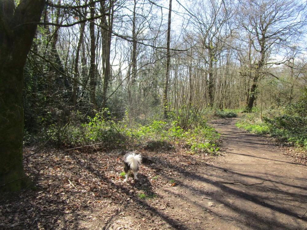 A25 woodland dog walk near Guildford, Surrey - Surrey dog walks.JPG