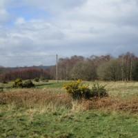 A22 forest dog walk, East Sussex - east sussex dog walks.JPG