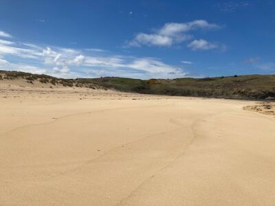 Stunning sandy and dog-friendly beach, Scotland - Driving with Dogs