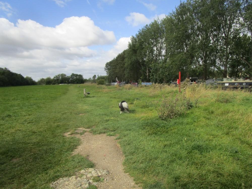 A361 Riverside pub/cafe and dog walk, Gloucestershire - Cotswold-dog-walk-and-pub.JPG