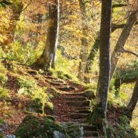 A69 Popular dog walk and river gorge, Northumberland - Dog walks in Northumberland.jpg