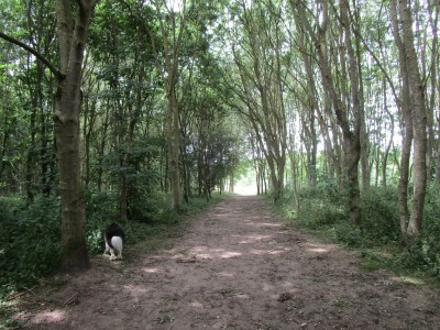 National Forest dog walk near Ratby and dog-friendly pub, Leicestershire - Driving with Dogs