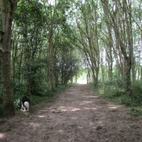 National Forest dog walk near Ratby and dog-friendly pub, Leicestershire