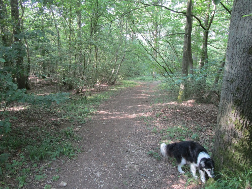 Woodland dog walk near two dog-friendly pubs, Northamptonshire - Dog walk and dog-friendly pub Northamptonshire