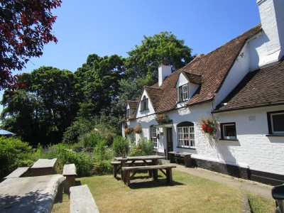 Dog walk and dog-friendly pub near Henley, Oxfordshire - Driving with Dogs