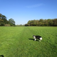Jane Austen dog walk and dog-friendly pub, Kent - Kent dog-friendly dog walk and dog-friendly pub